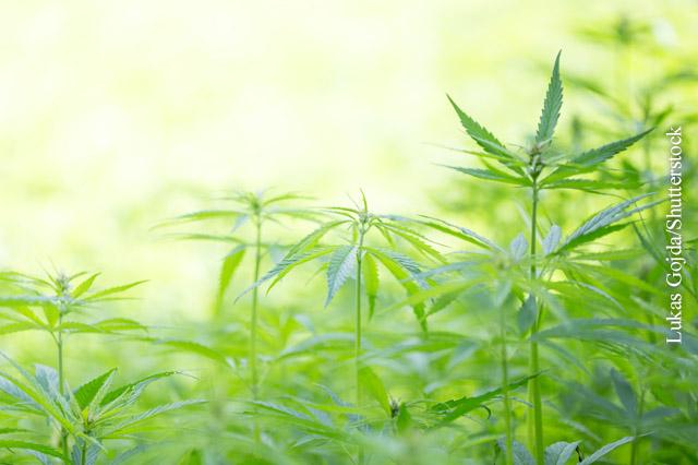 Zyklisches Erbrechen durch Cannabis