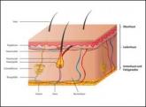 Die Haut ist das größte Organ beim menschlichen Körper